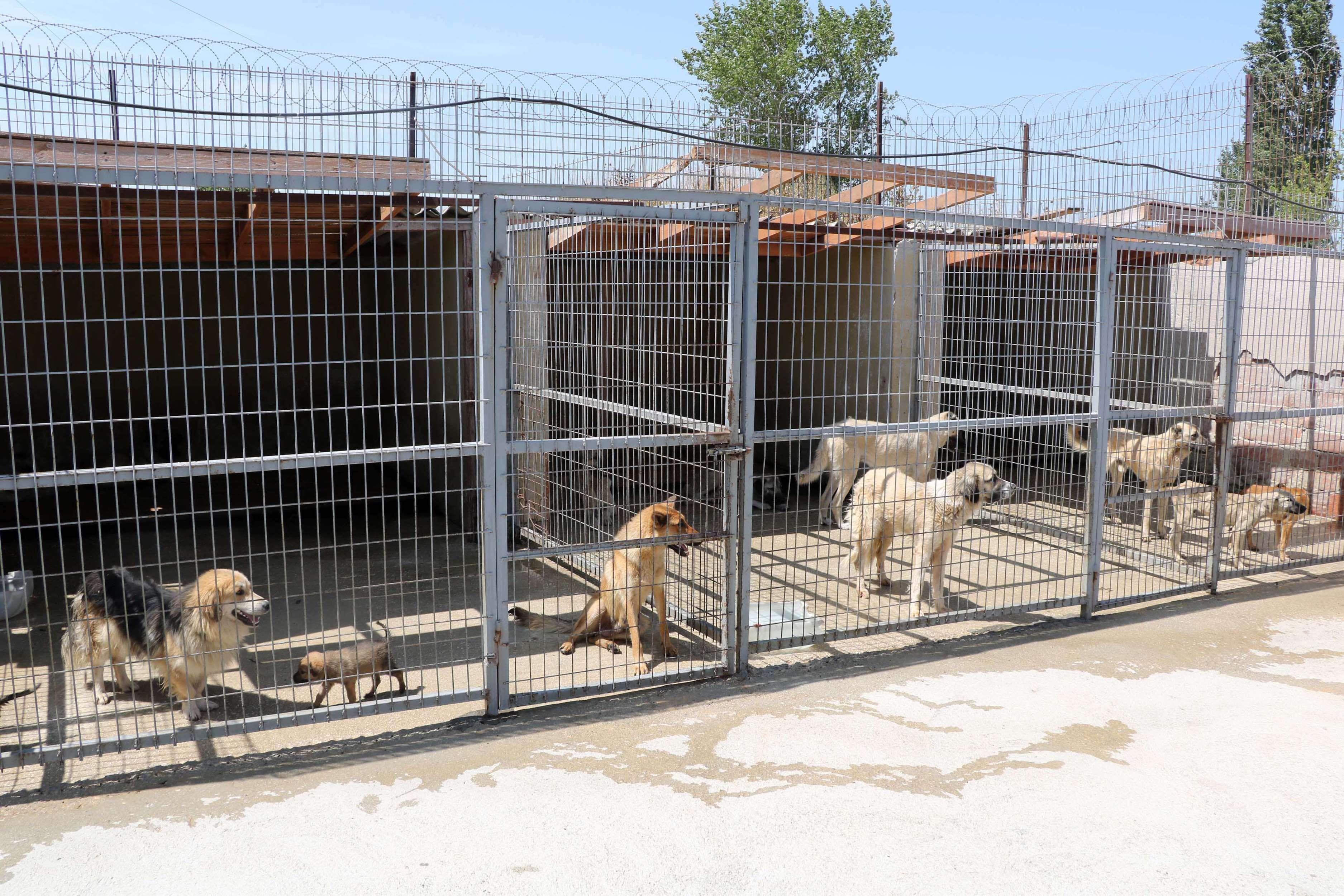 Edirne, Keşan Belediyesi Geçici Hayvan Barınağı'ndan bir kare