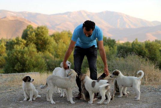 Van'da Müdür yardımcısı sokak hayvanlarının koruyucusu oldu