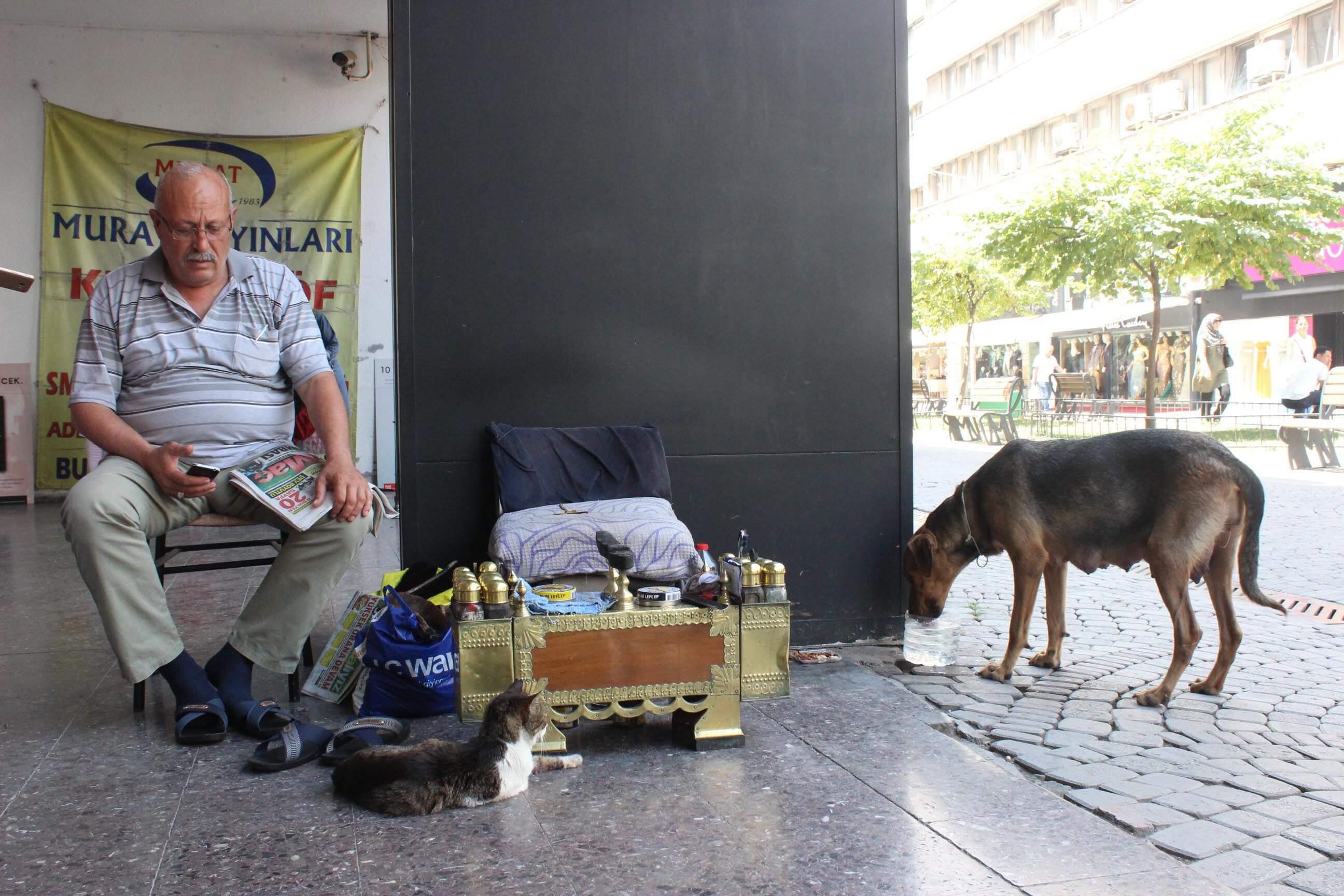 Tarihi Kemeraltı Çarşısında Azmi Sidar her sabah sokak kedi ve köpeklerini besliyor.