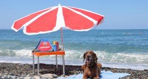 Narkotik köpek Vuslat emekliliğe ayrıldı