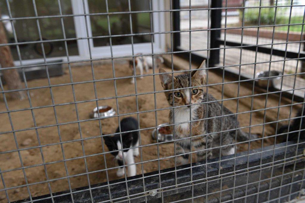 Bursa Osmangazi'de Yavru kedi sahiplendirme ünitesi'nde yavru kediler yeni yuvalarını bekliyor