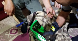 battaniyeye sarılan kedi çekiç yardımı ile kavanoz parçasından kurtuldu
