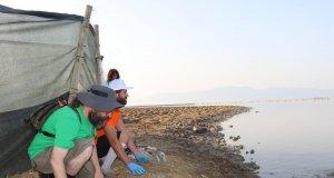 176 yavru flamingo halkalandı