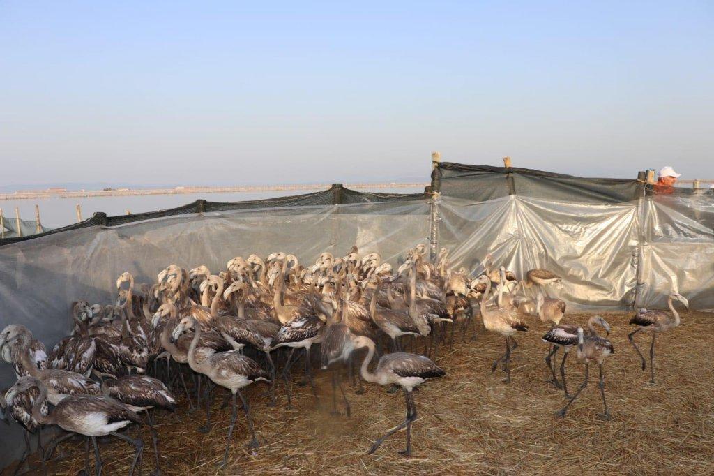 flamingoların fotoğrafı