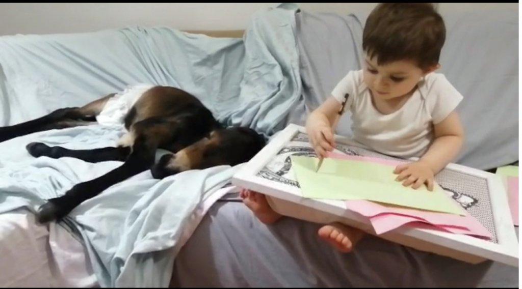2 yaşındaki Yusuf Agah sıpa uyurken onun yanında oturup resim çiziyor