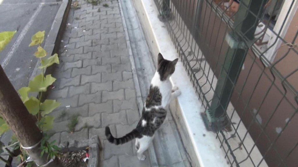 apartman boşluğunda mahsur kalan yavrusunu bekleyen anne kedi