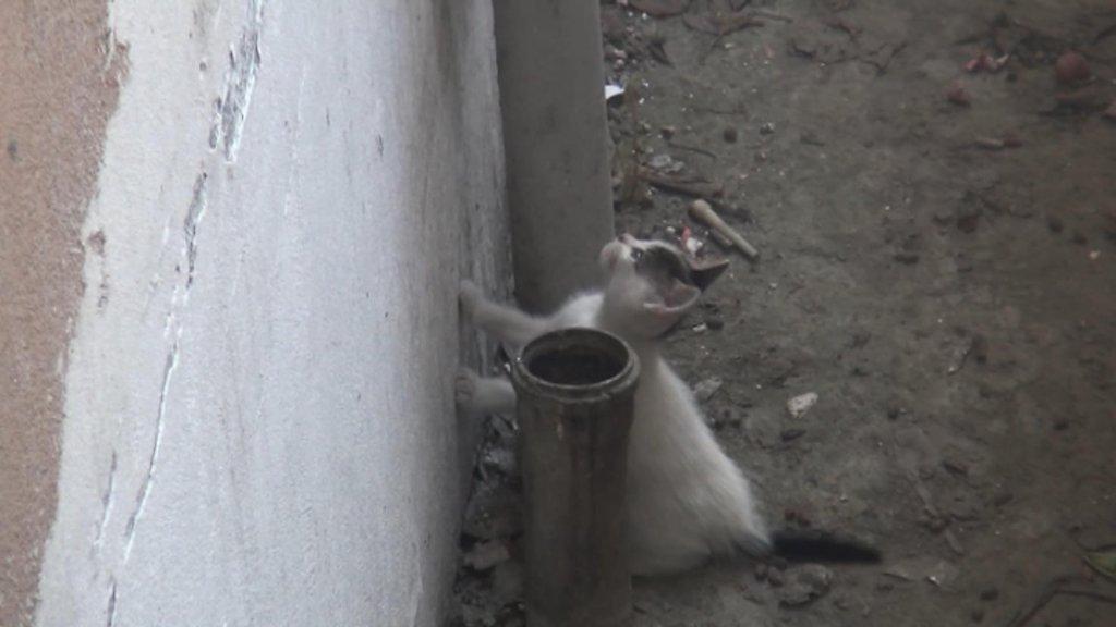 apartman boşluğunda mahsur kalan yavru kedi