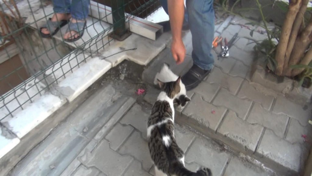 mahsur kalan yavru kedi kurtarıldıktan sonra annesine kavuştu