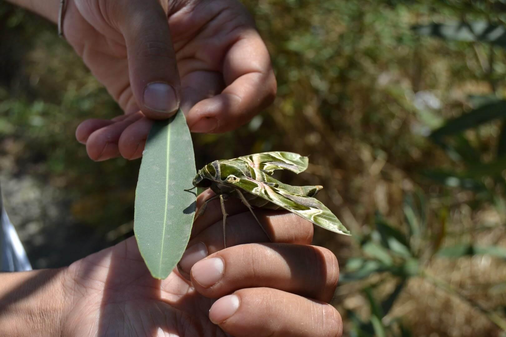 bitkin halde bulduğu mekik kelebeğini eliyle besliyor