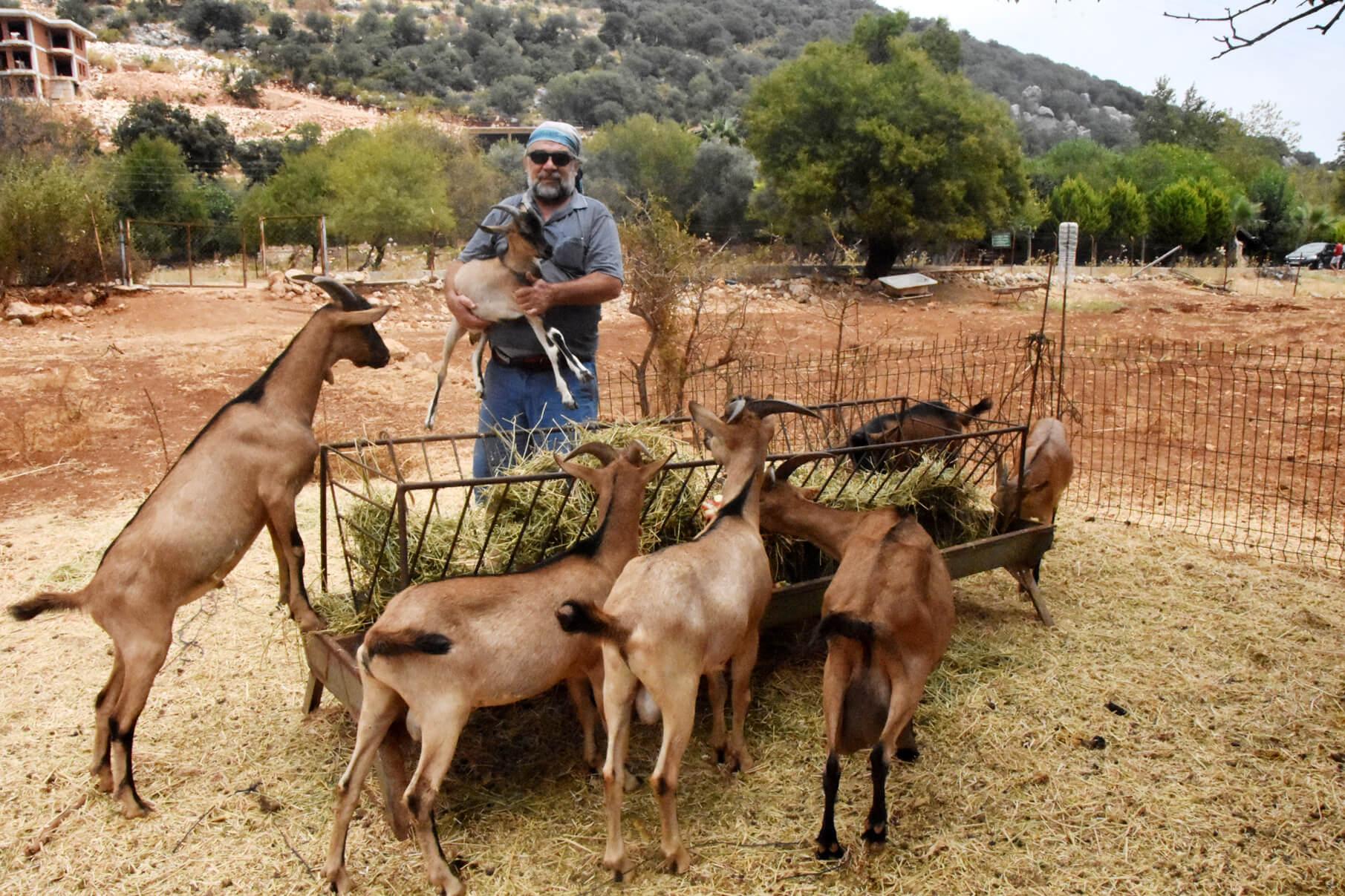 Alpin keçisi ve yaban keçisi çiftleşmesi sonucu yeni bir keçi ırkı ortaya çıkmış olabilir mi?