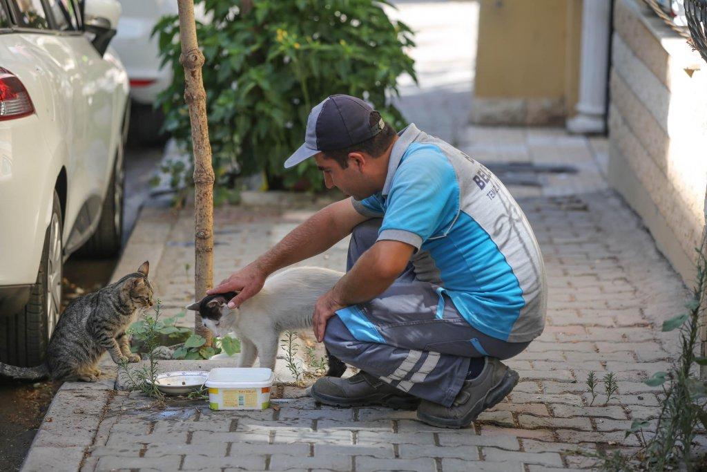 Temizlik işçisi sokak kedilerine mama ve sularını vermiş onları severken