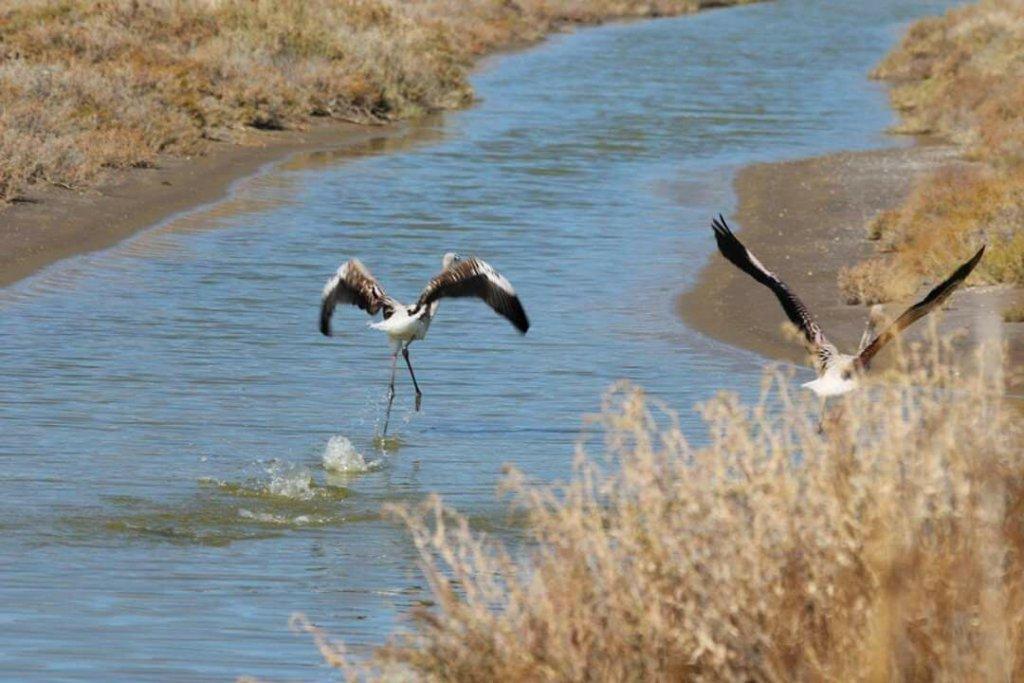 uçmaya hazırlanan iki flamingonun arkadan resmi