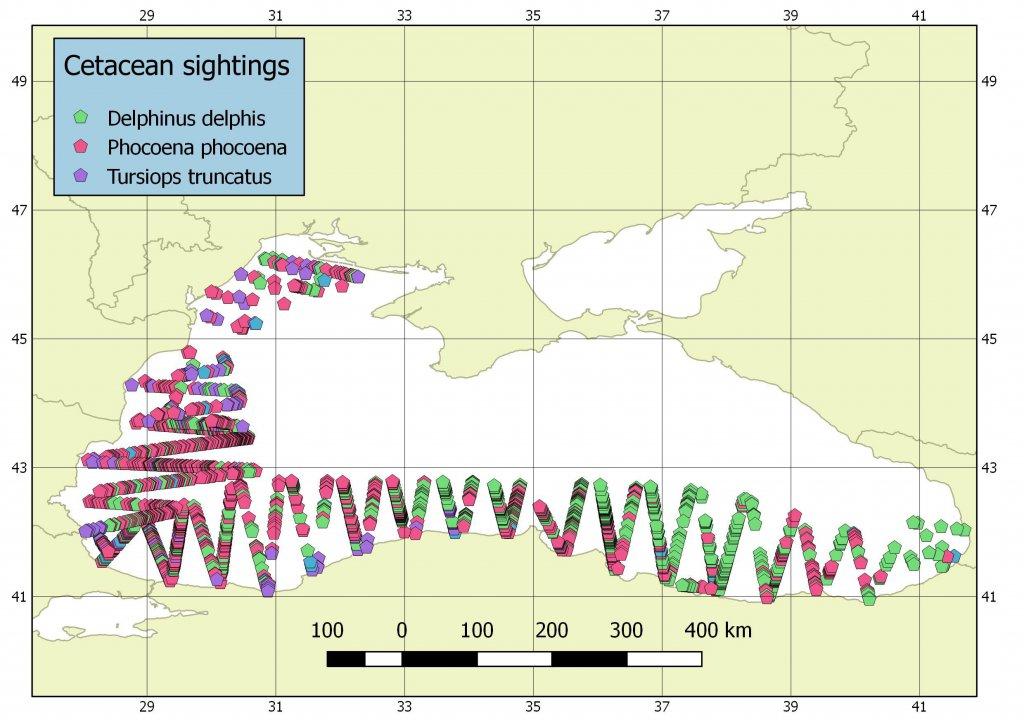 Karadeniz'de sayımı yapılan yunuslar için hazırlanan veri örneği