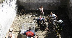 3 4 saat süren çalışma sonrası ayı ailesi mahsur kaldığı yerden kurtarıldı
