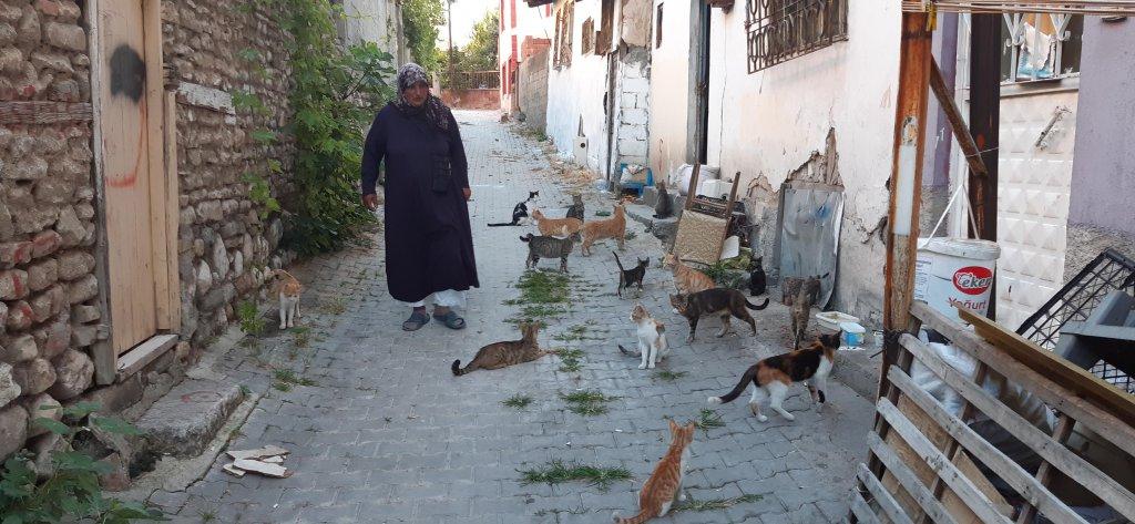 Sokak kedilerinin tedavisini de kendi yaptırıyor