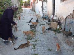 Oyuncak satarak mama satın alan Songül Ünal sokak kedilerini besliyor
