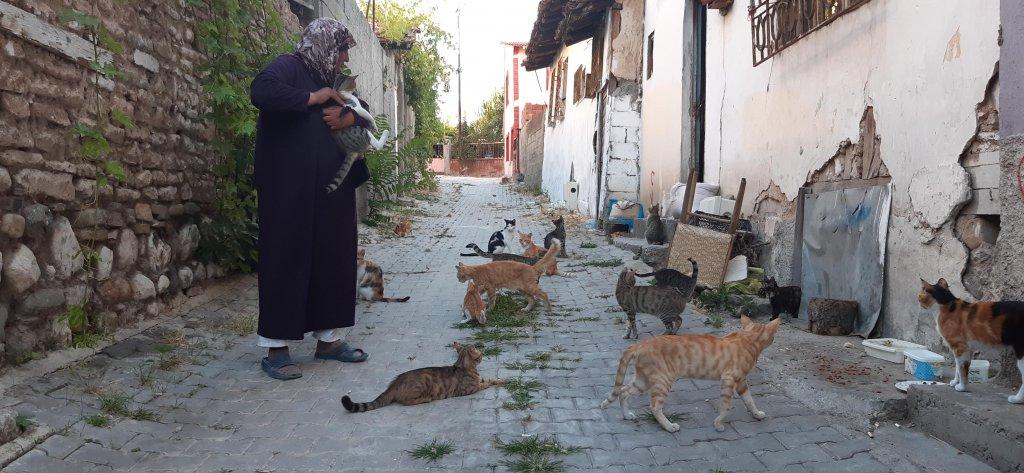 Sokak kedilerini hem seviyor hem besliyor