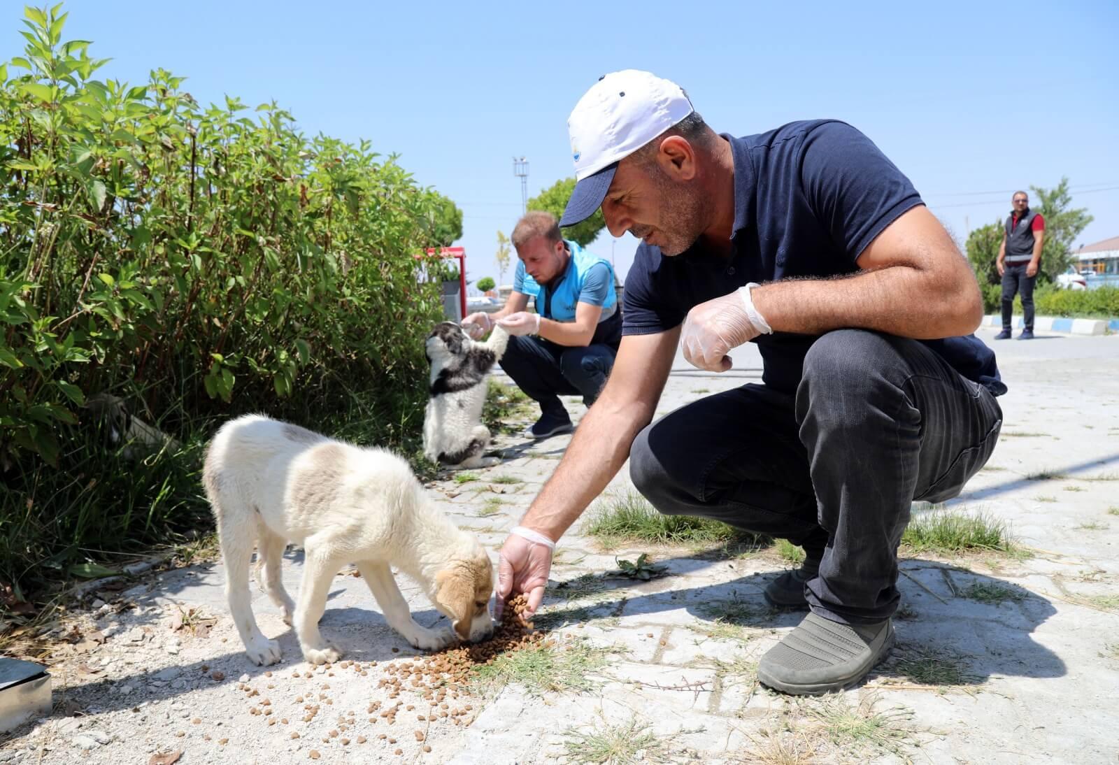 Yavru sokak köpeği dağıtılan mamalardan yiyor.