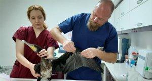 Kontrolleri yapılan karabatak ve veteriner hekimler
