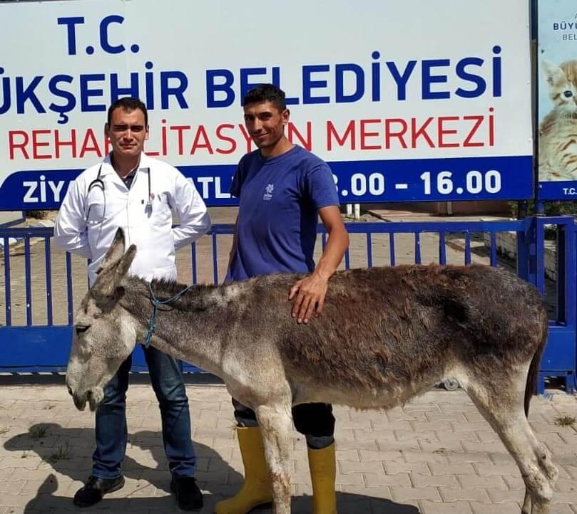 sahipsiz eşeği İzmirli bir hayvansever sahiplendi