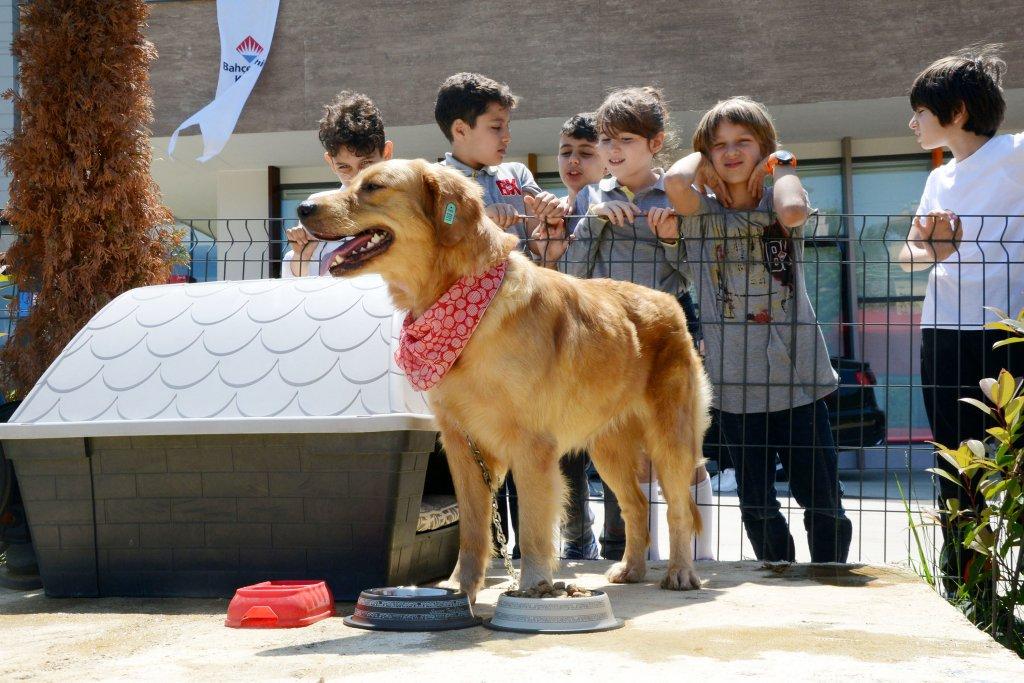 sokak köpeğine çocukların ilgisi büyük