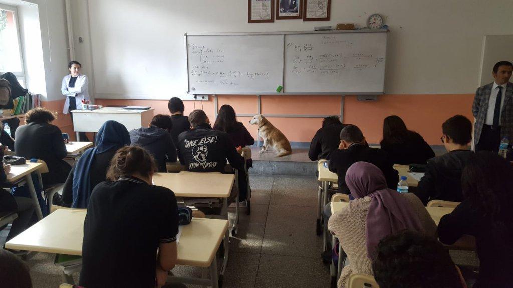 Öğrencilerle beraber ders dinleyen sokak köpeği