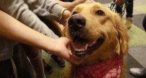 Öğrenciler Sokak köpeklerini çok seviyor