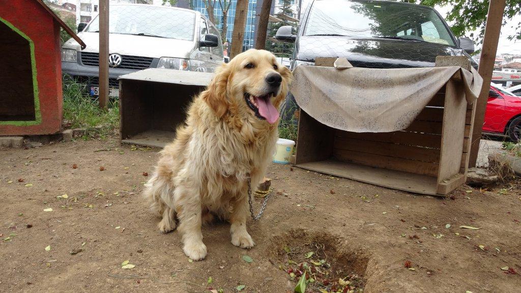 Sokak köpeği okula gitmeden önce dernekte tedavi ediliyor