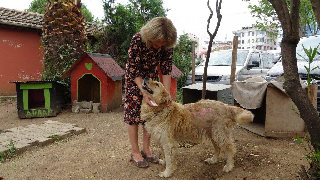 Sokak köpekleri dernekte okulda yaşayabilecek mi diye test ediliyor