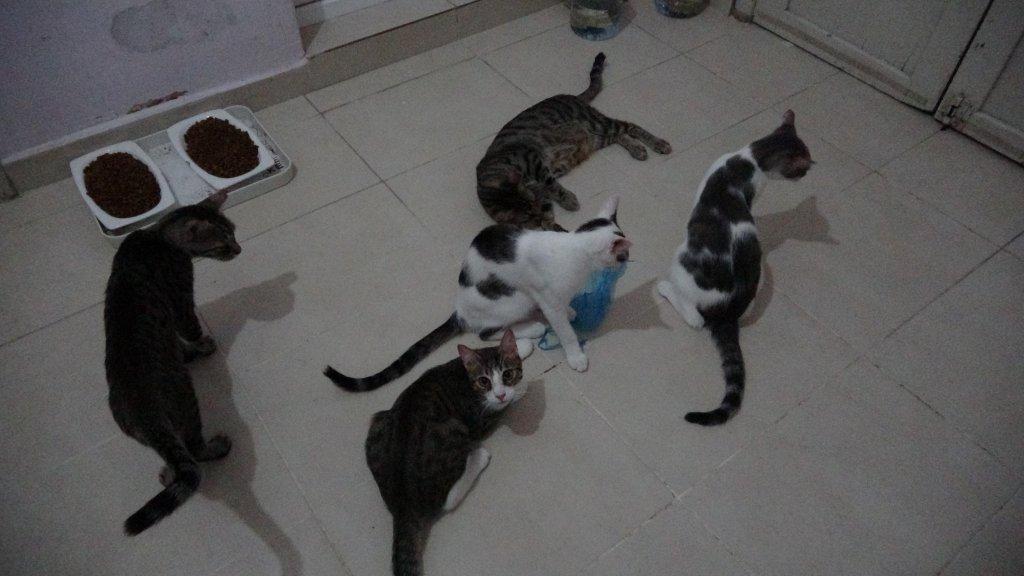 Aydın sevimli patiler derneğinin baktığı kedilerin bir fotoğrafı