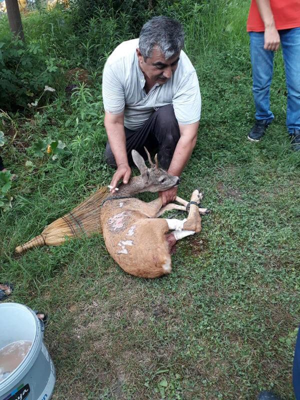 yardıma ve tedaviye ihtiyaç olan geyik için yetkililere haber verildi