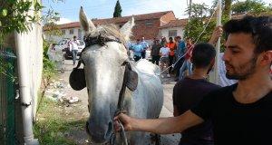 Sıcaktan ve yorgunluktan bayılan atın aç ve susuz bırakıldığı ve işkence gördüğü ortaya çıktı