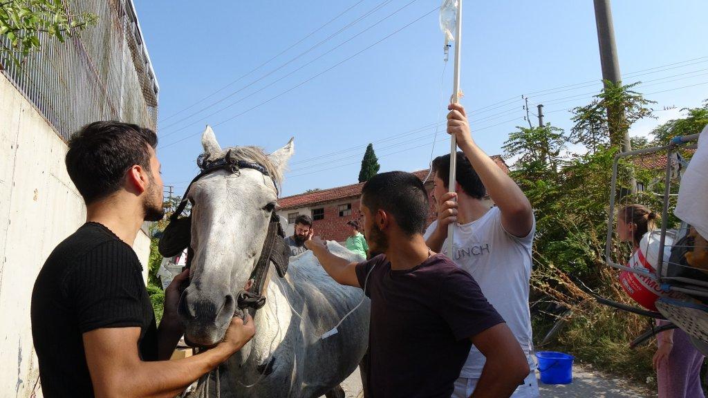 Bursa'da bayılan at kurtarıldı