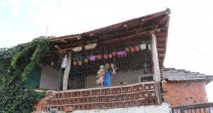 Satı Karaca, hayatını sokak hayvanlarına adadı