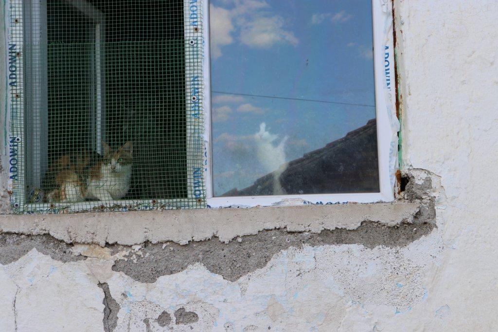 pencereye yapılmış kedi teli ardından görülen 2 kedi