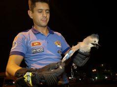 yaralanmış çiha kuşu itfaiye ekipleri tarafından kurtarıldı