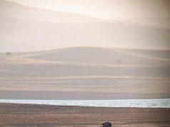 baraj gölü kıyısına gelen yavru ayının resmi