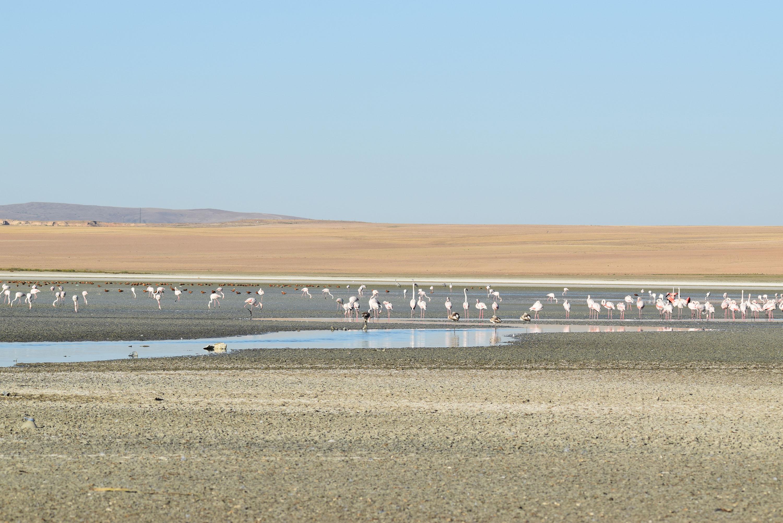 Düden gölünün kuruması flamingo başta olmak üzere onbinlerce kuşu etkiliyor.
