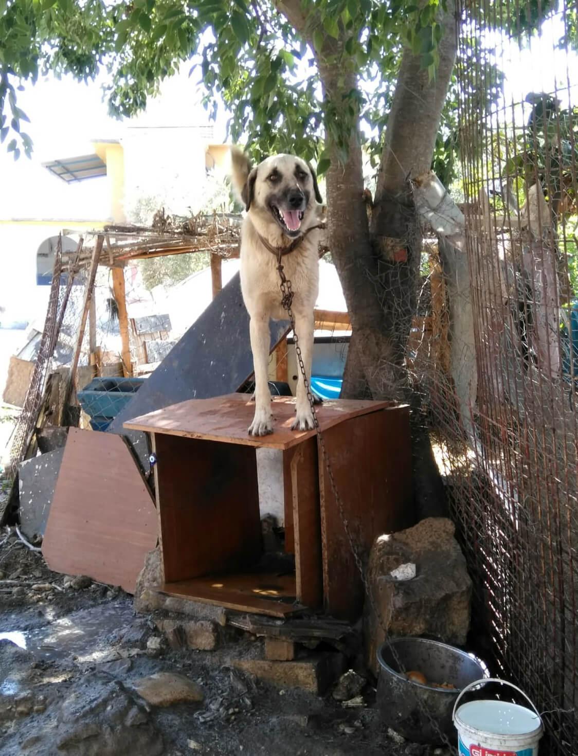 Canice öldürülen köpek 'Duman'