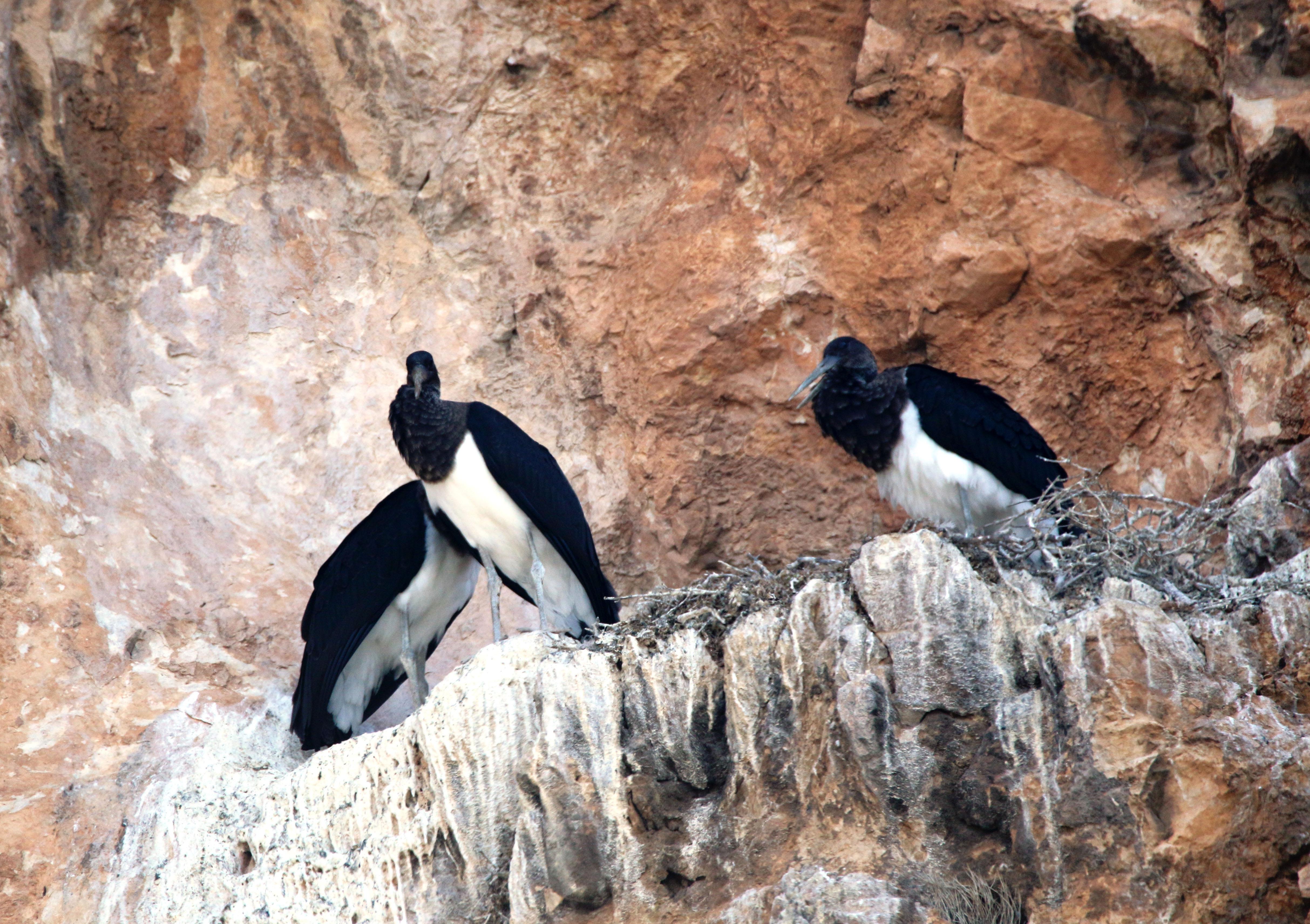 Salda Gölü'ne gelen kara leylek ailesinin resmi