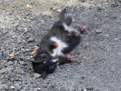 Karabük'te ayakları kesik bir yavru kedinin cansız bedeni bulundu
