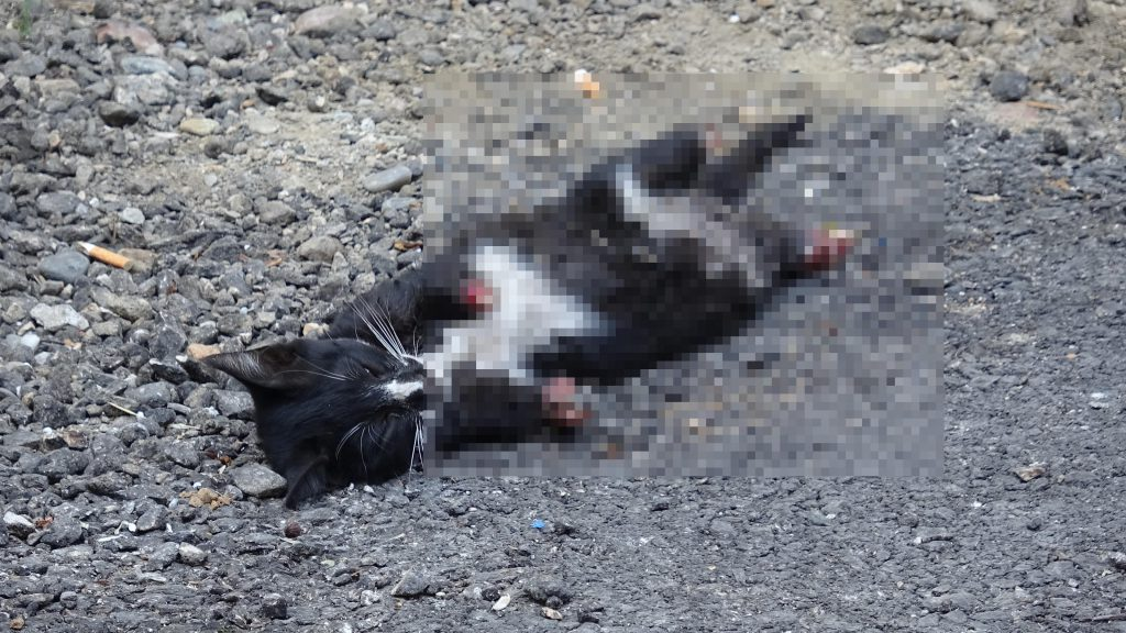 yavru kedinin ayakları bulunamadı polis ekipleri kamera kayıtlarından olayı araştırıyor