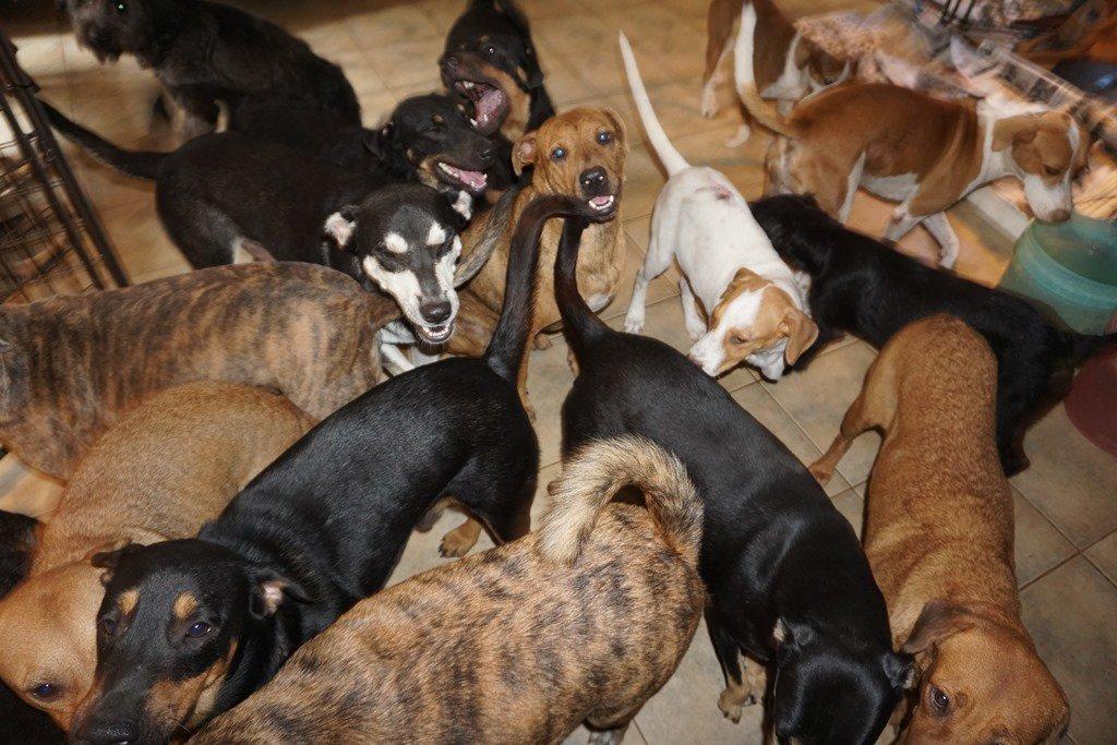Bahamaları vuran kasırgadan köpekleri evine alarak korudu