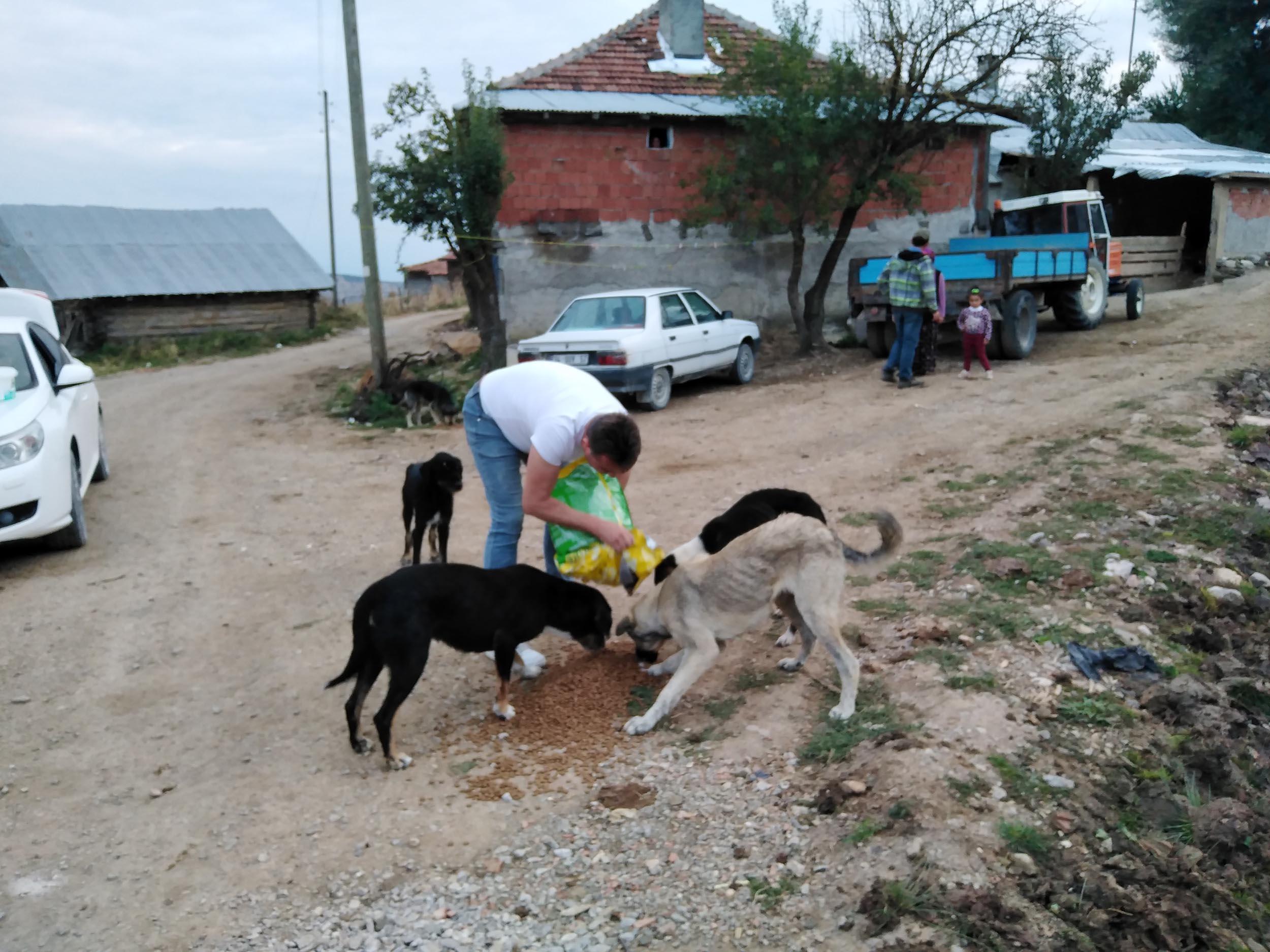 Emirli yaylasına terk edilen köpekler için yardım çağrısı
