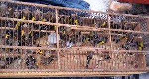 minibüsten bulunan kuş kafeslerinden birinin tepeden çekilmiş resmi