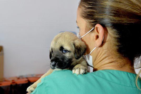 Kurtarılan yavru köpeğe 'Mucize' adı verildi