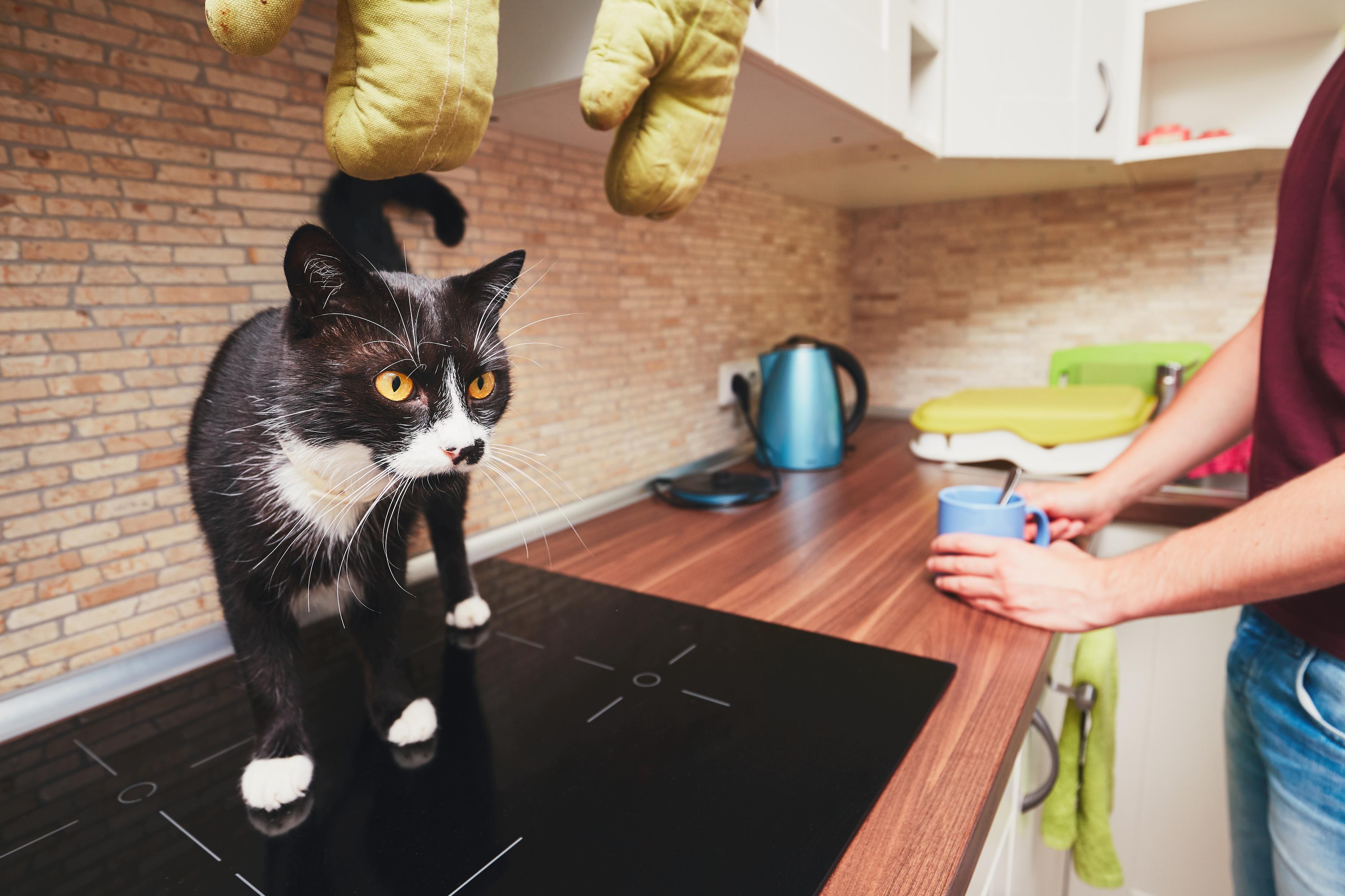 mutfakta tezgah üzerindeki kedi