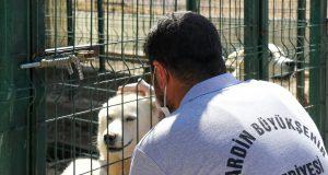 Barınak yetkilisi sokak köpeği ile ilgileniyor