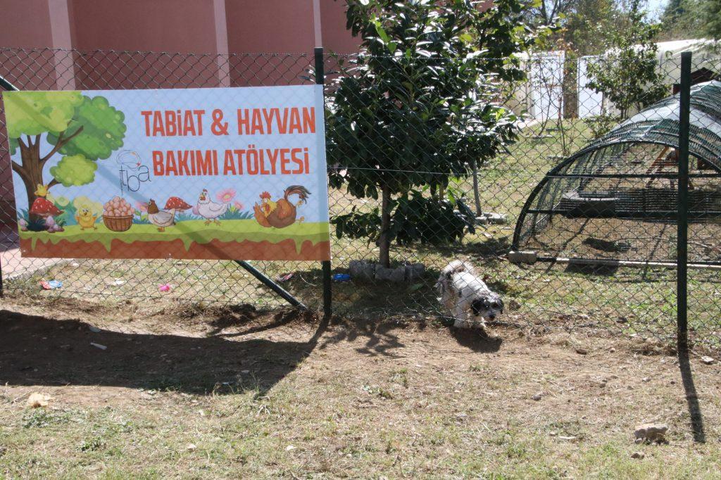 Sokak köpeği sahiplenen okul onların yaşayabileceği bir bölüm hazırladı