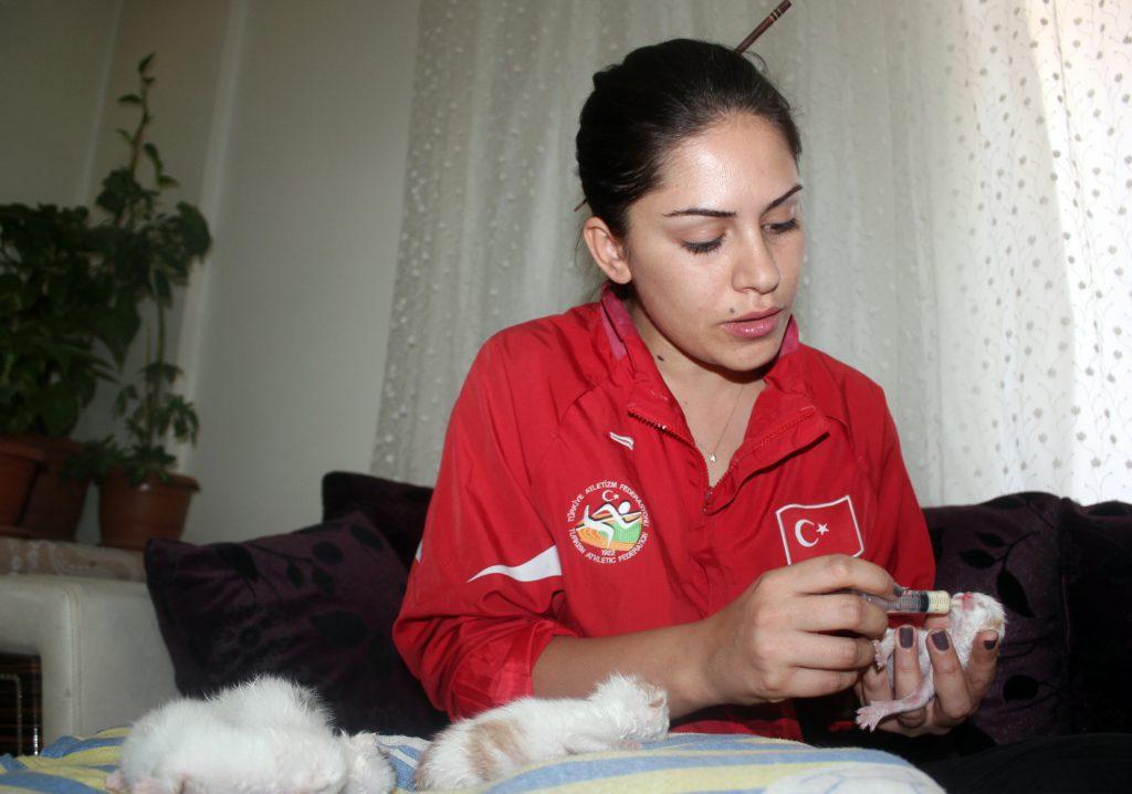 Milli sporcu Figen Aşık, kedi yavrularını elleriyle besliyor